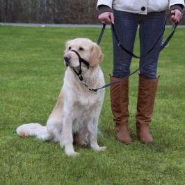 Trixie     dog  TOP TRAINER - 31cm  L