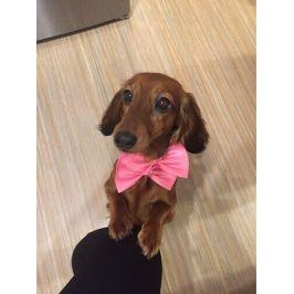 Vsepropejska Gentle růžový motýlek pro psa | 20 - 42 cm