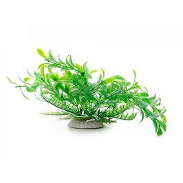 Rostlina JK - Ludwigia zelená 14-17cm