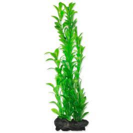 Rostlina Tetra Hygrophila L 30cm