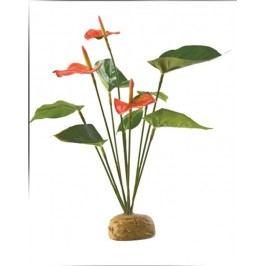 Rostlina EXO TERRA Anthurium Bush