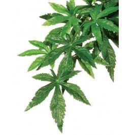 Rostlina EXO TERRA Abuliton velká 80 cm