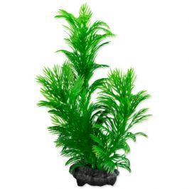 Rostlina Tetra Green Cabomba S 15cm