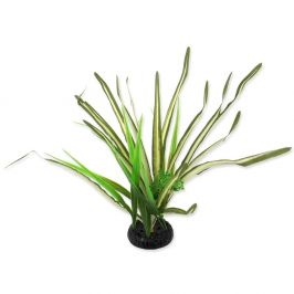 REPTI PLANET Rostlina travina Spartina 30 cm