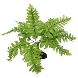 REPTI PLANET Rostlina kapradí Nephrolepis 20 cm